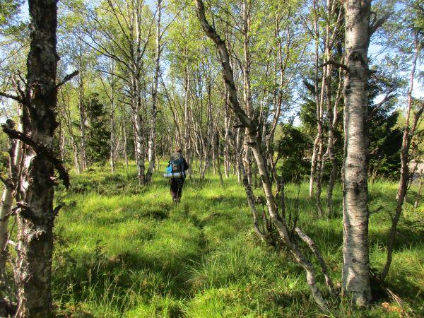 Skogsbad Jämtland